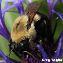 Protect Bees.  Ban Neonicotinoids