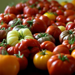 GMO Labelling